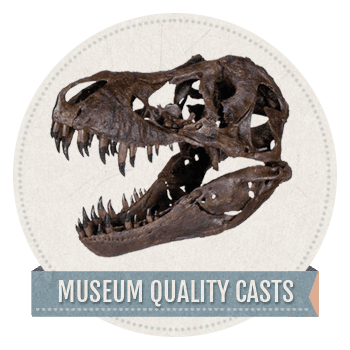 Geologic_Museum_Quality_Casts copy