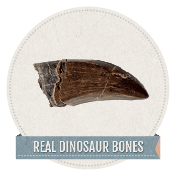 Geologic_Real_Dinosaur_bones copy