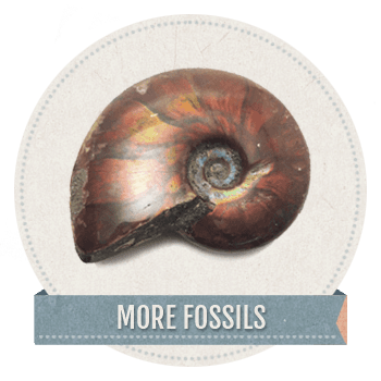 Geologic_more_fossils1 copy