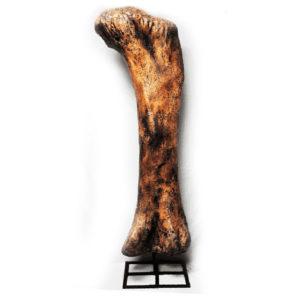apatosaurus-femur-