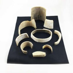 Woolly Mammoth Tusk Collection